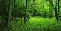 Natura zorgpolis